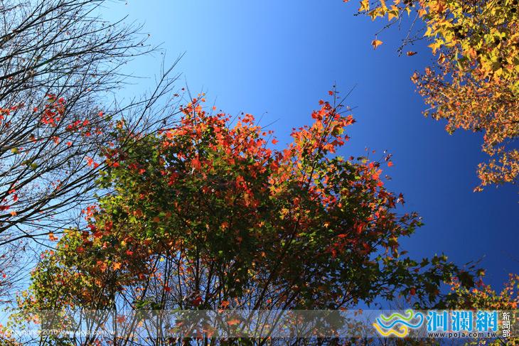 綠水楓葉.jpg