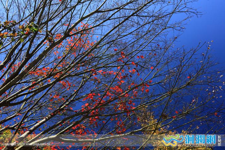 綠水楓葉-02.jpg