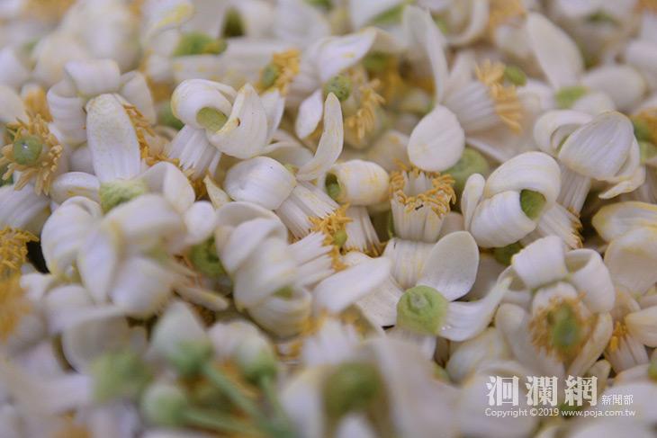 柚花-07.jpg